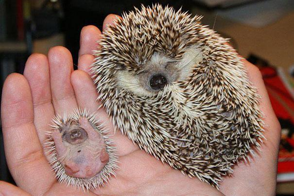 animals-with-miniature-versions-of-themselves-3
