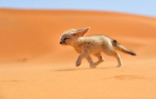 amazing-fox-photos-12