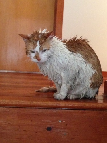 bathcat (6)