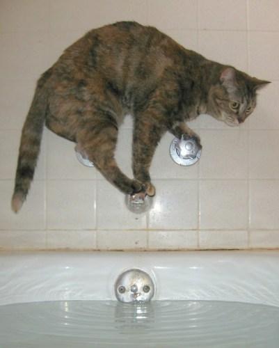 bathcat (8)