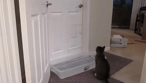 catdoor3
