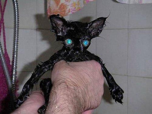 catshower (4)