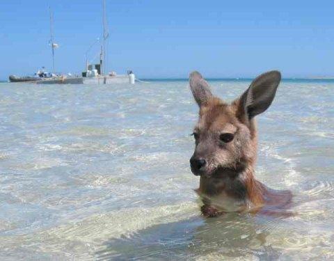 kangaroo1 (8)