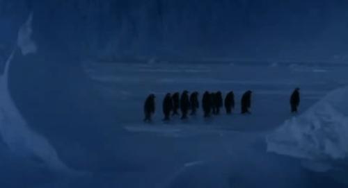 penguinslip