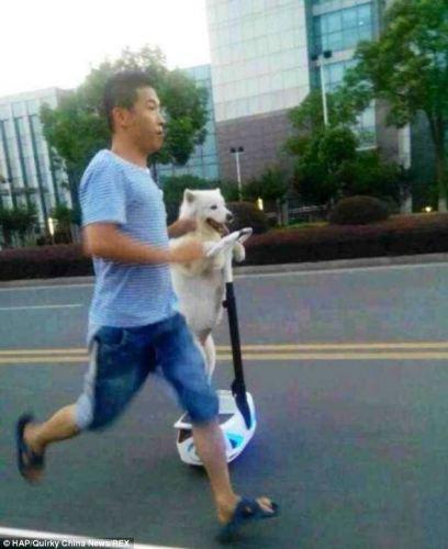 segwaydog (2)