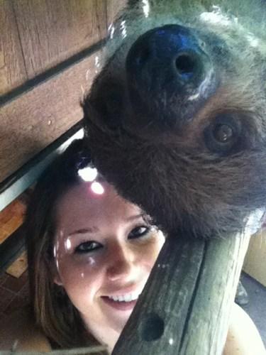 sloth1 (15)