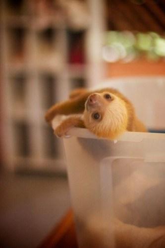 sloth1 (19)
