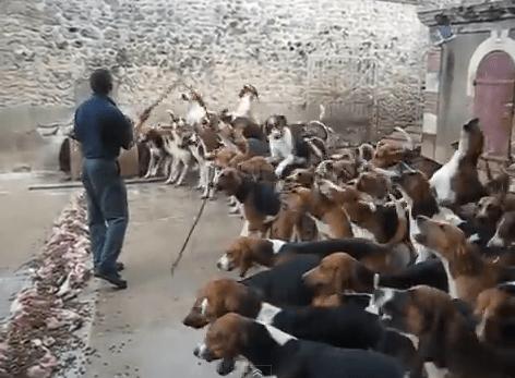 dogfeeding