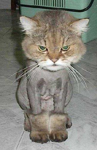 funnycatscut (3)