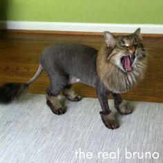 funnycatscut (5)