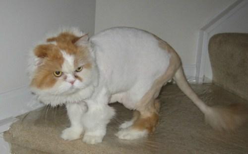 funnycatscut (7)