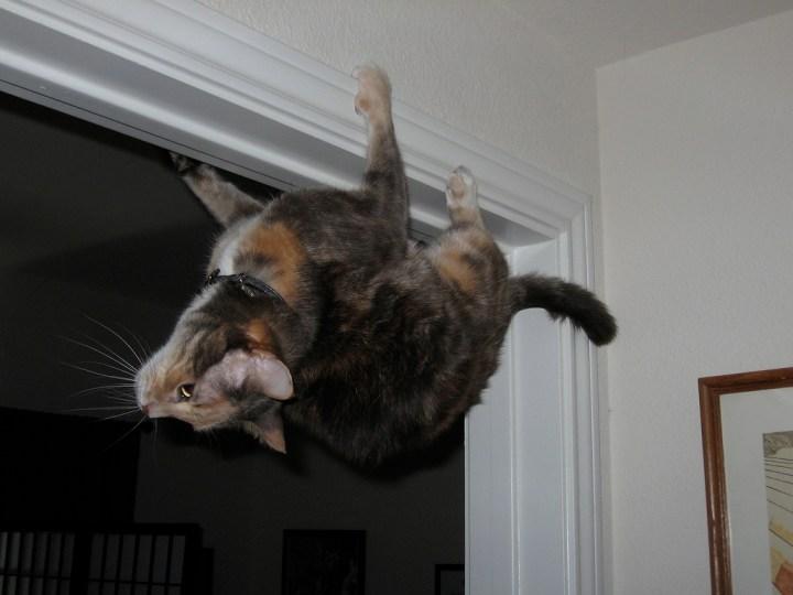 cat_funny (3)