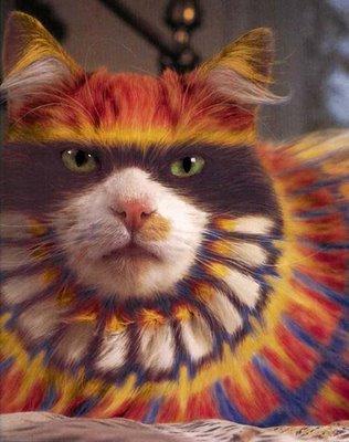 cat_makeup (9)