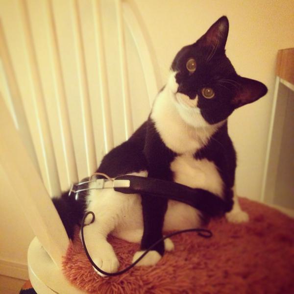 cat_picture (10)