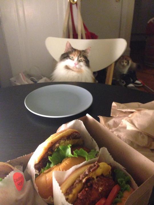 cat_picture (12)