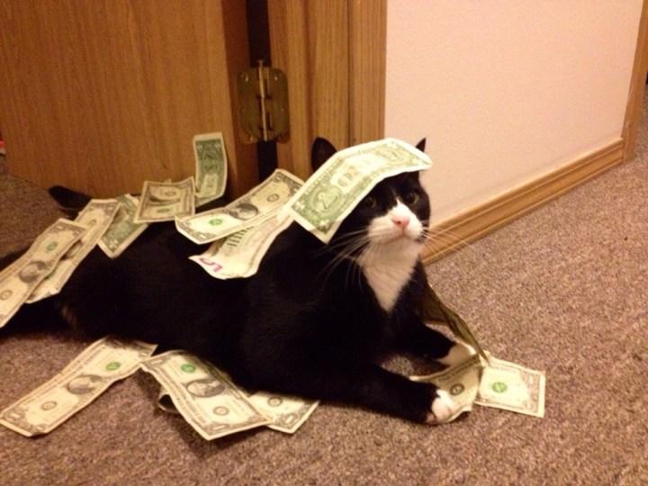 cat_rule (10)