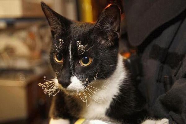 cat_unhappy (3)