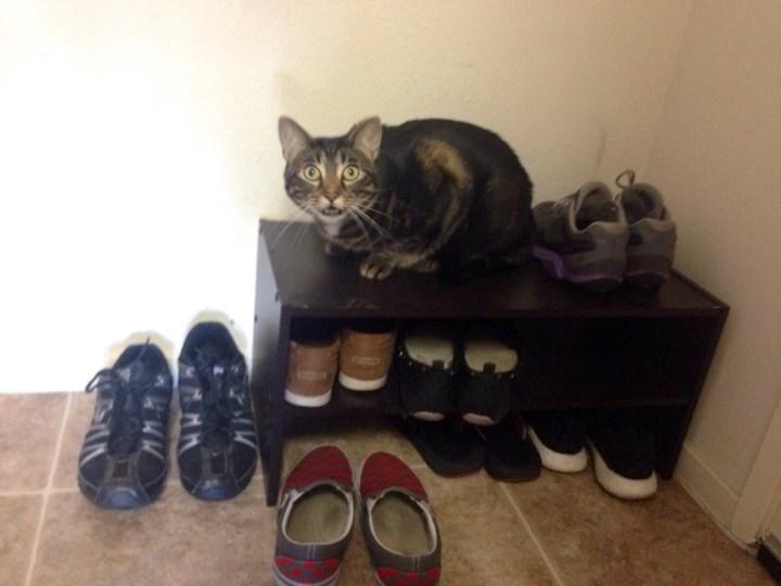 cat_unhappy (5)