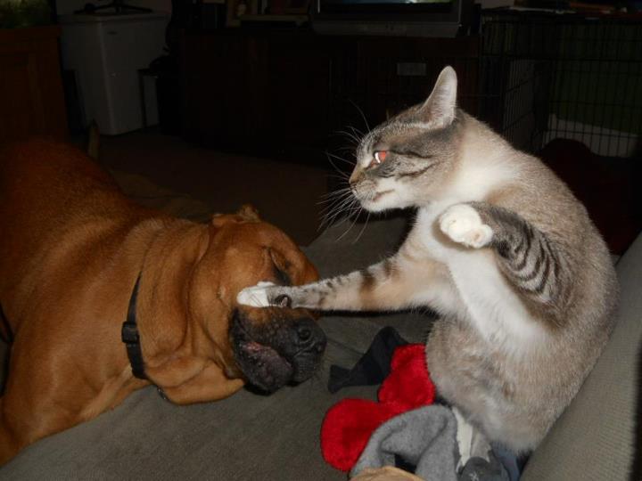 catanddog (11)