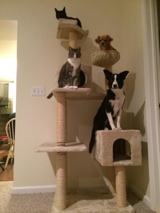 catanddog (13)