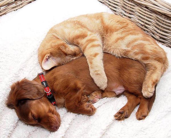 catanddog (6)