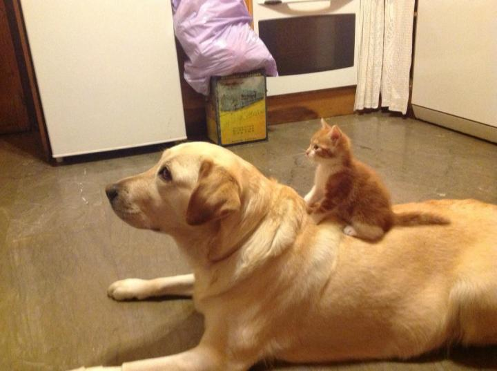 catanddog (8)