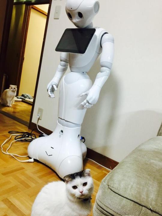 catandpepper (2)