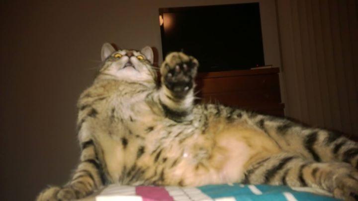 curazy_cat (10)