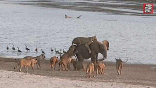 elephant_survives4