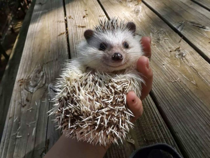 hedgehog _heartwarming (15)