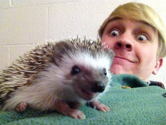 hedgehog _heartwarming (3)