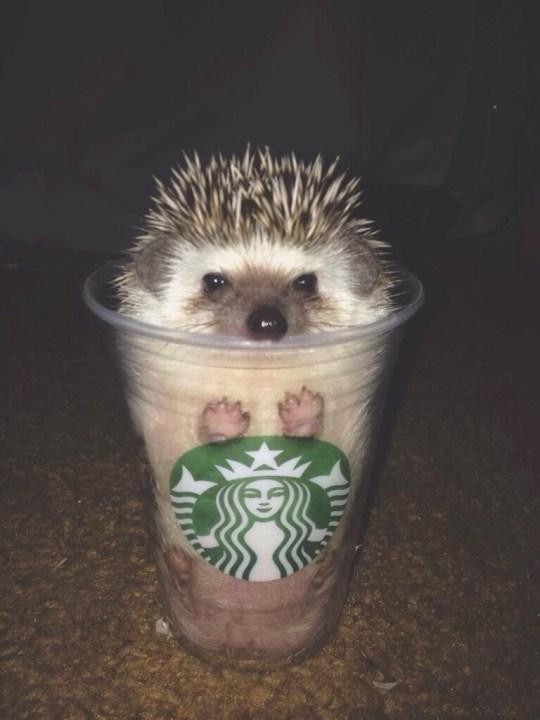 hedgehog _heartwarming (6)
