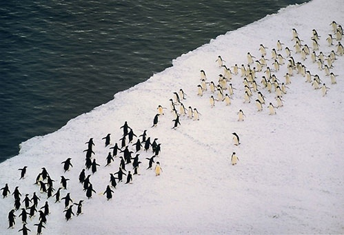penguin (7)
