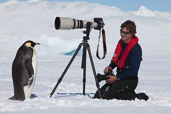 penguin (8)
