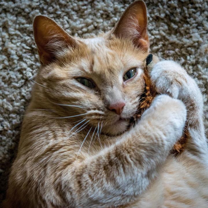 surprisecat (14)