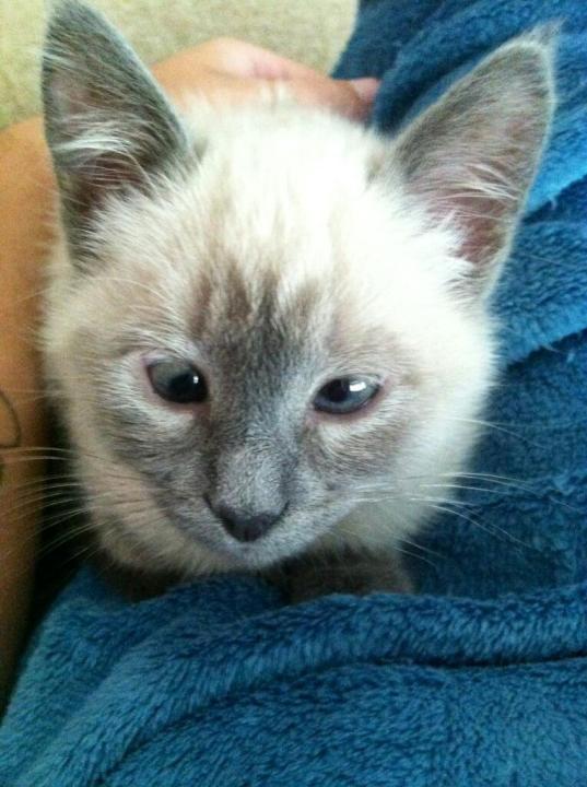 thnkful_cat (10)