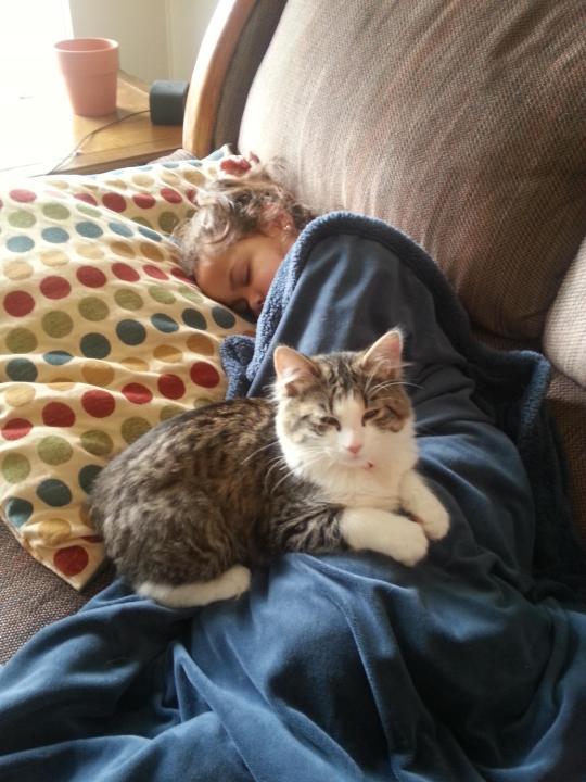 thnkful_cat (14)