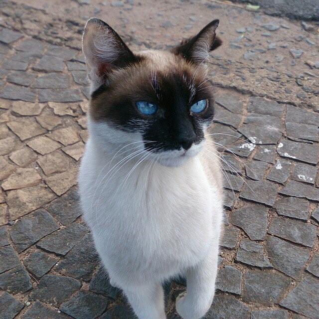 thnkful_cat (2)