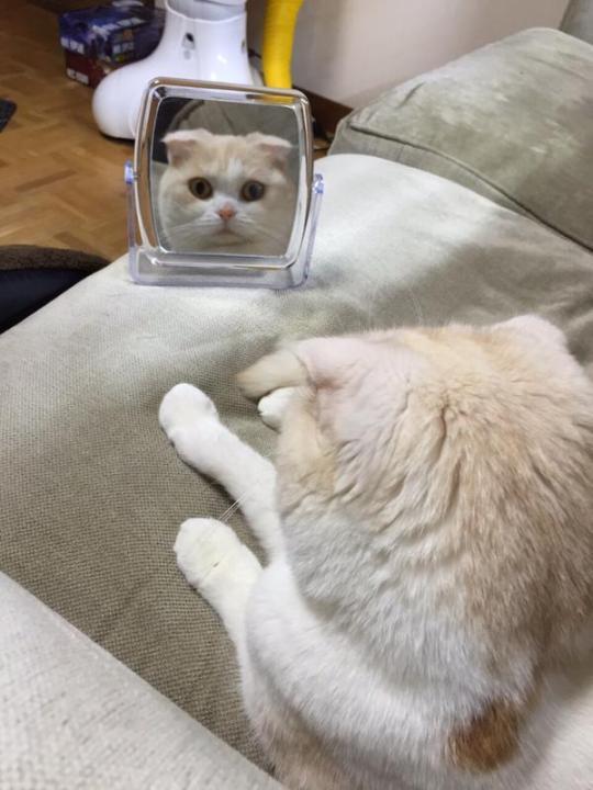 catlife (12)