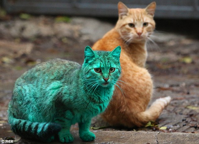 colorfulcat2