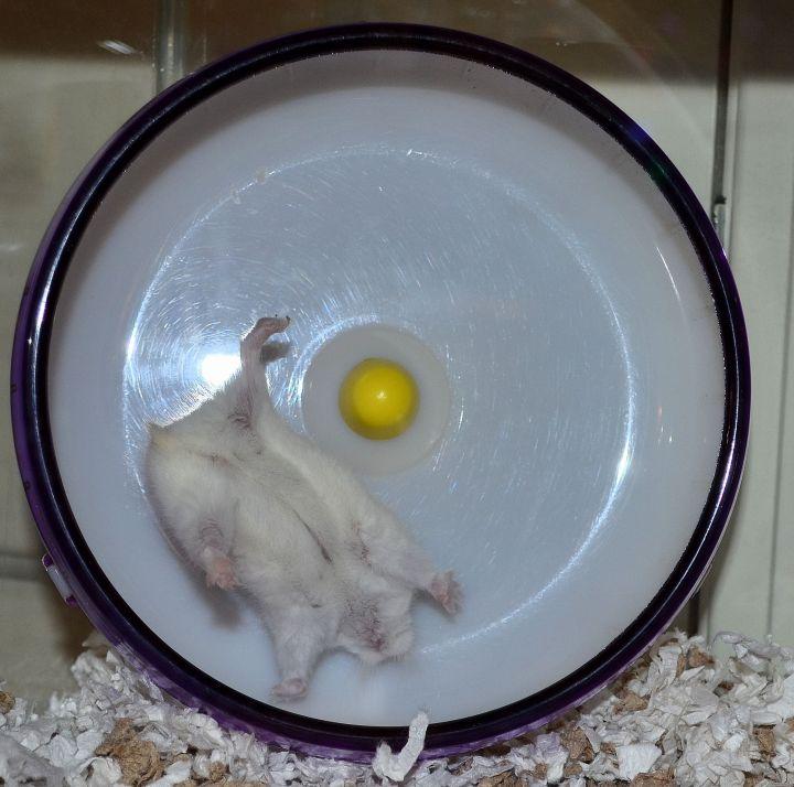 hamster_cute (14)