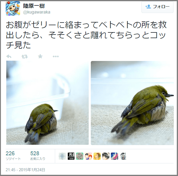 bird_mejiro5