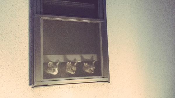 cat_happen (2)