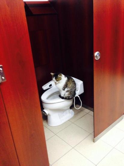 cat_happen (7)