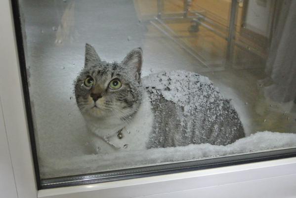 snowcat (1)