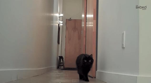 cat_baloon1