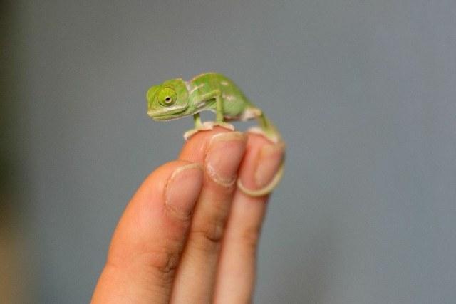 chameleonBABY (8)
