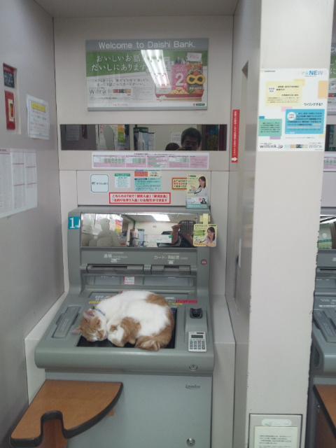 bankcat4