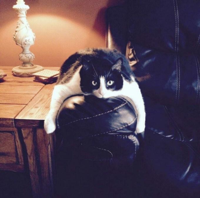 cat_saikyo (17)