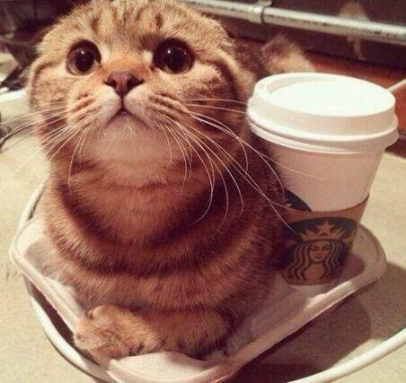cat_saikyo (9)